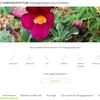 Harpagophytum, fiche de bon usage à destination des consommateurs