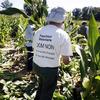 Où sont les parcelles OGM en France?