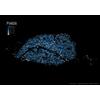 Paris : Croisement du cadastre avec FiLoSoFi de l'INSEE #DataPosters